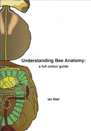 Understanding Bee Anatomy: a full colour guide
